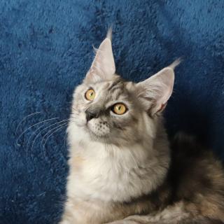 Penelope_1